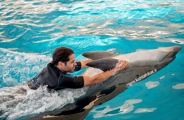 شنا با دلفین
